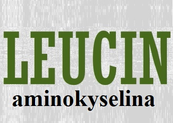 Aminokyselina leucin - jaké má účinky na naše zdraví?