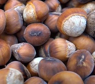 Jaké benefity pro naše zdraví přináší lískové ořechy?
