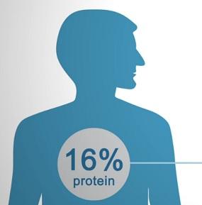 Bílkoviny představují přibližně 16-20 % naší celkové tělesné hmotnosti