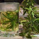 Citronová verbena (Aloisie citronová) – jaké má účinky na zdraví a jak ji vůbec použít?