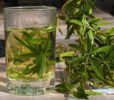 Jelikož citronová verbena tak nádherně voní, je používána při přípravě čajů, nápojů, do salátů či zeleninových pokrmů.