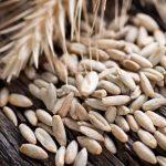 Žito a žitné pečivo a zdraví – výhody žita, díky kterým je zdravější než pšenice a ječmen