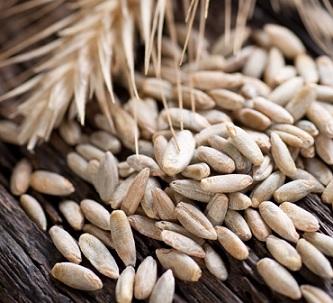 Proč do svého jídelníčku zařadit žito místo pšenice?