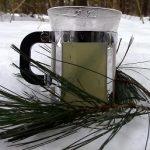 Čaj z borovicového jehličí – kdy ho pít a na co je dobrý?