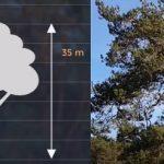 Esenciální olej z borovice lesní – účinky a kontraindikace