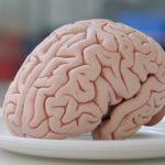 Poruchy, nemoci a problémy mozku – co vše ho může trápit?