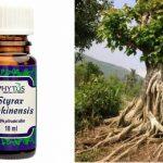 Esenciální olej Benzoe (Styrax tonkinensis, Styrax benjoin) – vlastnosti, účinky, kontraindikace