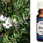 Esenciální olej Březule (Bursera delpechiana) – účinky, vlastnosti, kontraindikace