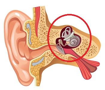 Otoskleróza vzniká již u mladých lidí, většinou ve věku 20–40 let. Kromě dědičných vlivů se na onemocnění podílí i hormonální výkyvy