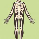18+ zábavných a zajímavých faktů o našich kostech a kloubech
