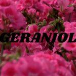 Geraniol – co je to – proč se používá v kosmetice? A je nějak škodlivý?