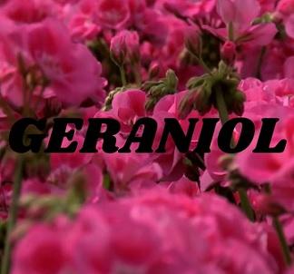 Geraniol - co je to - proč se používá v kosmetice? A je nějak škodlivý?