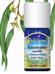 Esenciální olej Eucalyptus Smiithii - účinky, vlastnosti, kontraindikace