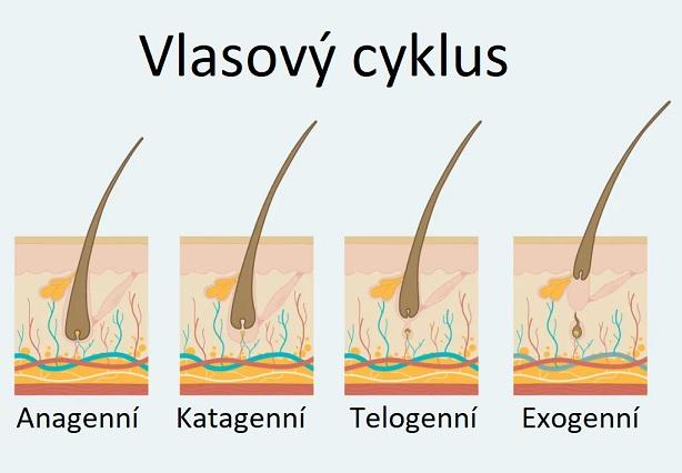 Cyklus růstu vlasu