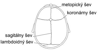 Popis lebečních švů