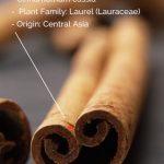 Esenciální olej Kasie – Skořice čínská (Cinnamomum cassia) – účinky, vlastnosti, kontraindikace