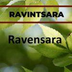 Esenciální oleje Ravensara versus Ravintsara – jaký je mezi nimi rozdíl?