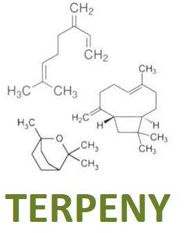 Terpeny a jejich účinky na zdraví