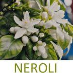 Éterický olej Neroli (Citrus × aurantium ssp. amara) – účinky, vlastnosti, kontraindikace