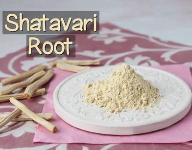 Ajurvédská bylina Shatavari harmonizuje hormonální systém - pomáhá při menopauzálních potížích