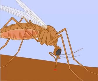 Nemoc se šíří z člověka na člověka kousnutím komára.