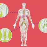 Co je to lymfatický systém těla? Jednoduše, přehledně