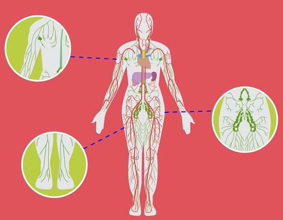 Lymfatický systém je takovým kanalizačním systémem našeho těla