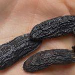 Esenciální olej Tonka (Dipteryx odorata) – účinky, vlastnosti, kontraindikace